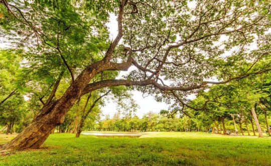 Monterrey, Inversión, Preventa, Departamento, Hogar, Fundidora, Renuévate, Naturaleza, familia, parque
